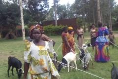 10-Parents-receive-goats